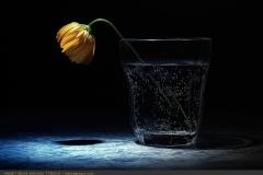 tekciçek